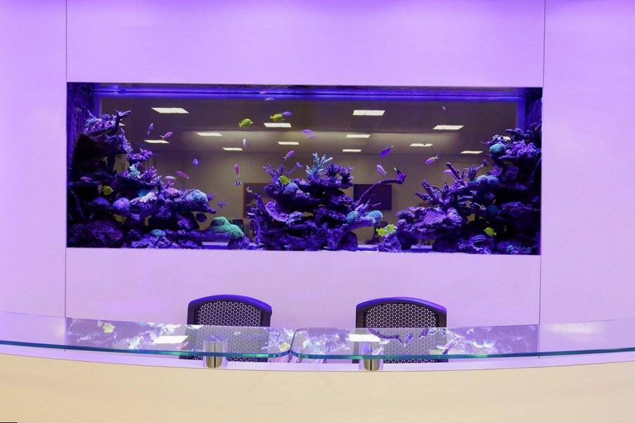 Прекрасный встроенный в стену аквариум