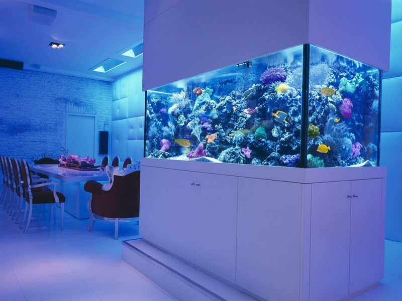 Разделяющий помещение аквариум