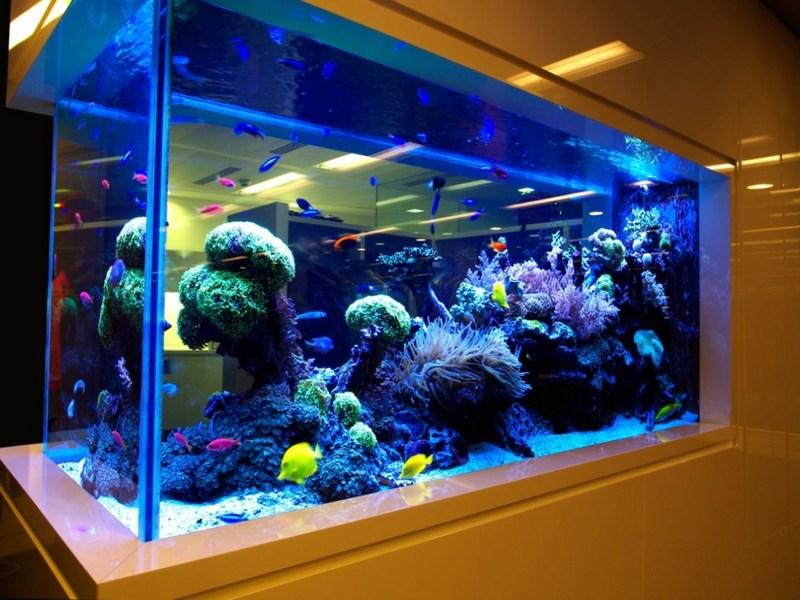 Роскошный аквариум
