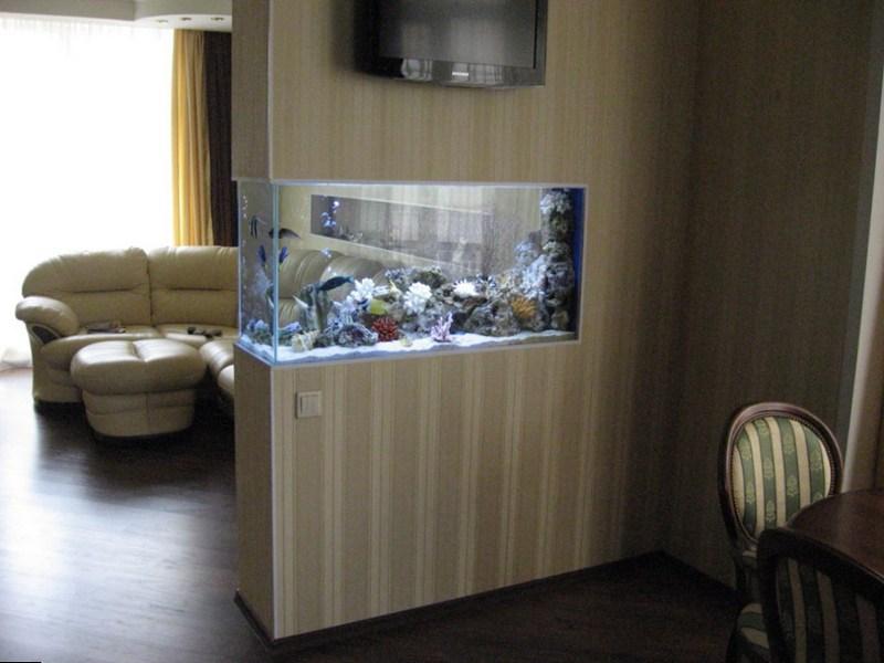 Пресноводный аквариум в перегородке