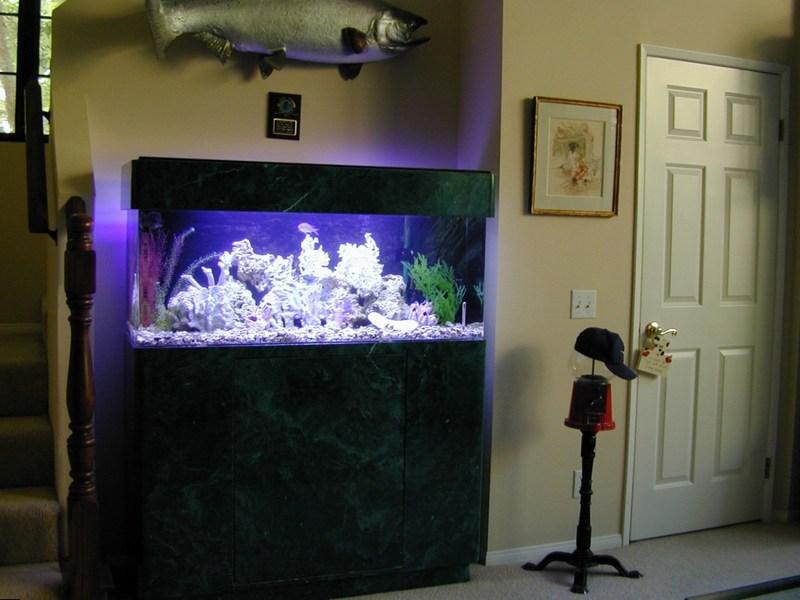 Аквариум с красивой подсветкой в интерьере