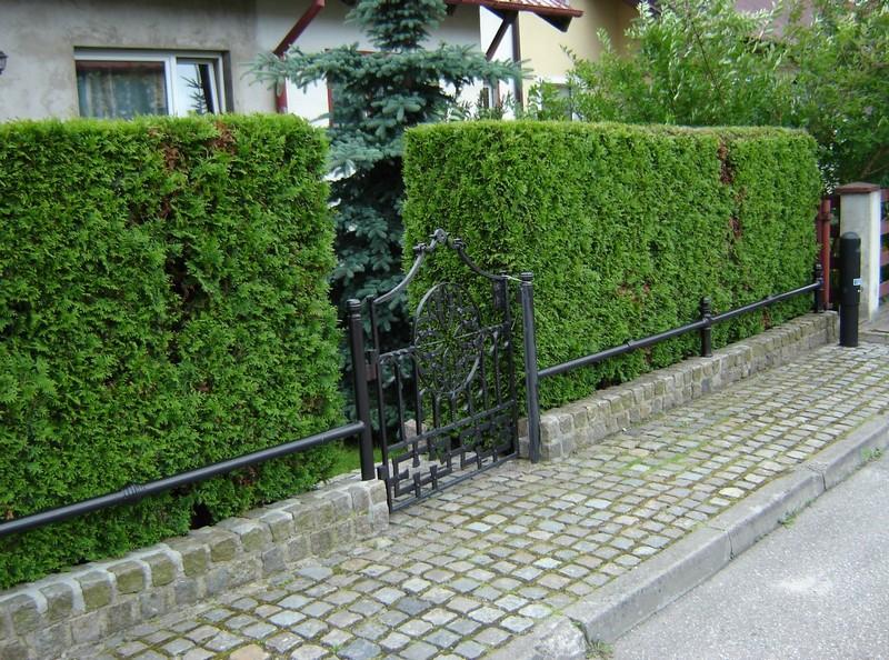 Живой забор с калиткой возле дома