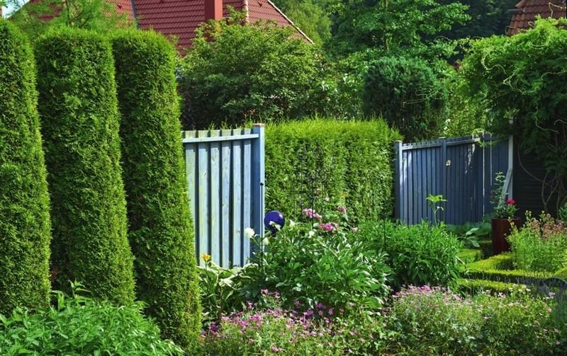 Комбинированный живой забор