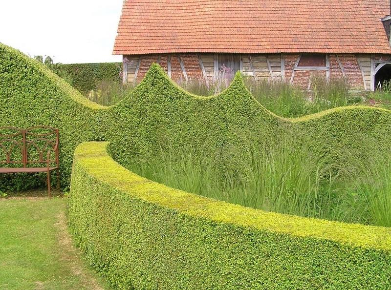 Необычные декоративные узоры на живой изгороди