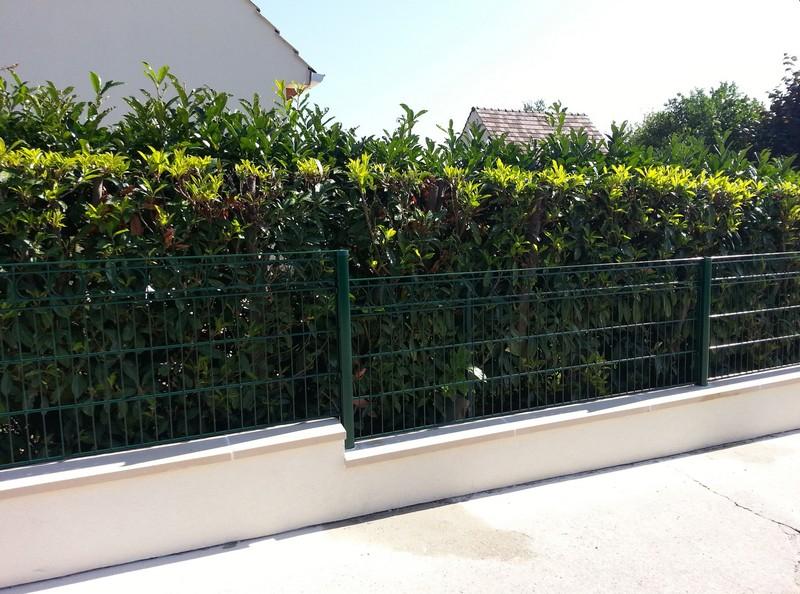 Живой зеленый забор в сочетании с металлической решеткой