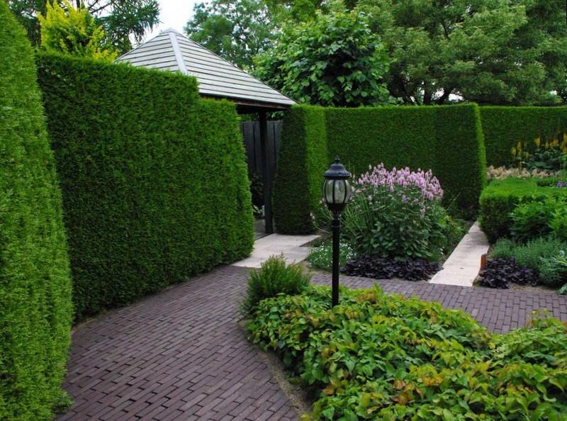 Живая изгородь органично вписывается в ландшафтный дизайн участка