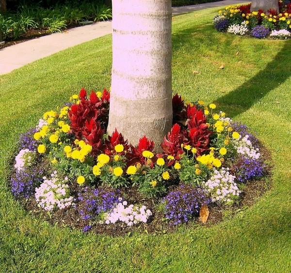 Цветочная клумба воокруг дерева