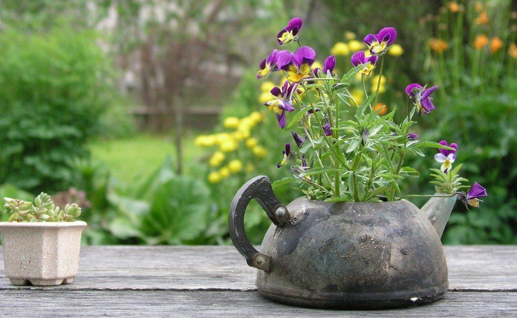 Миниклумба из старого чайника
